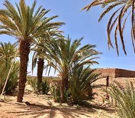 Palmeraie du Drâa Maroc.jpg