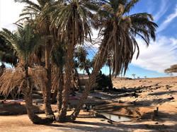 Oasis Oum Laalag desert maroc.jpg