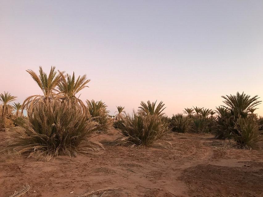 Palmeraie vallée Drâa Maroc.jpg