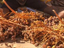 Dattes de Tagounite Maroc.jpg