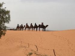 Caravane chamelière desert maroc.jpg