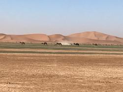 Sur la piste du Paris-Dakar désert Maroc.jpg