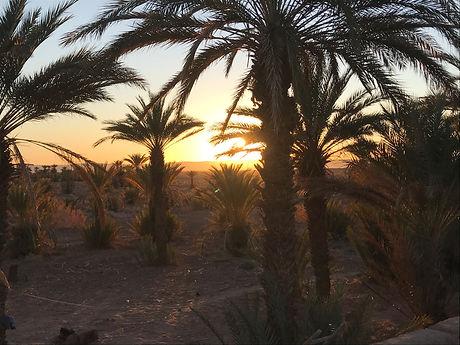 Oasis vallée du Drâa Maroc.jpg