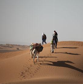 Excursion à dromadaire désert MHamid.jpg