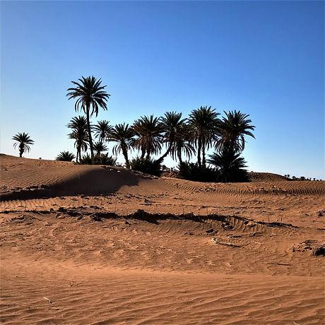 Oasis desert MHamid Maroc.jpg