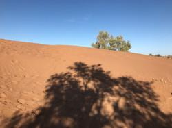 Jeu d'ombres sur le désert de M'Hamid.jpg
