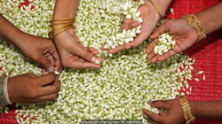 INDIA'S SACRED FLOWERS