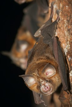 It's Complicated: Bats as the Most Vilified Creatures of the