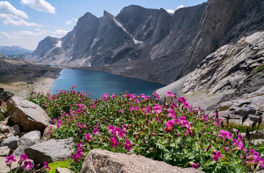 Wildflowers on Raid Peak Pass