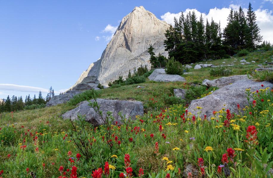 Wildflowers Under Mitchell Peak