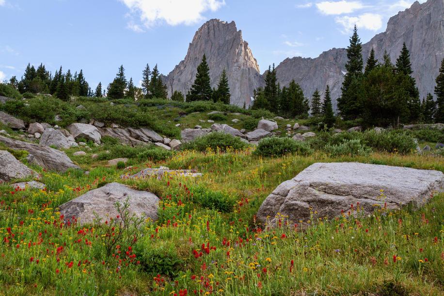 Wildflowers Under War Bonnet Peak