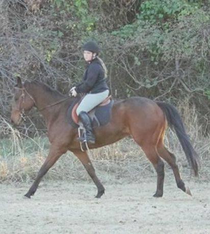 Shiloh under saddle.jpg