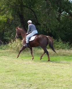 Geronimo under saddle a.png