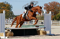 Thoroughbred Athletes, OTTB rescue. thoroughbred retraining