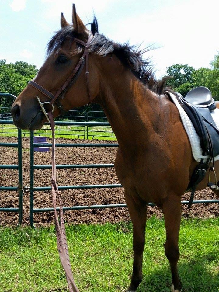 mampo under saddle 2.jpg