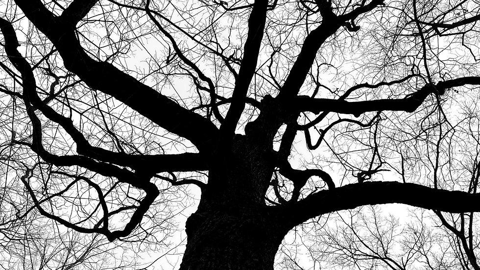 Mindfulness Community Tree Branches.jpg