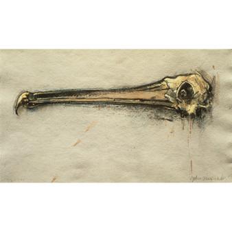Pelican Beak