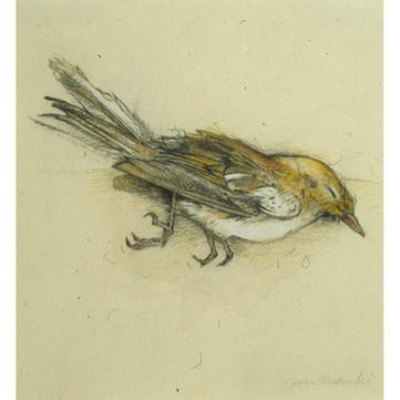 Sleeping Finch