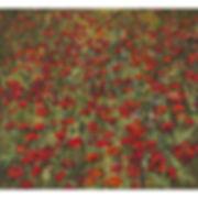 Poppies, 2016.jpg