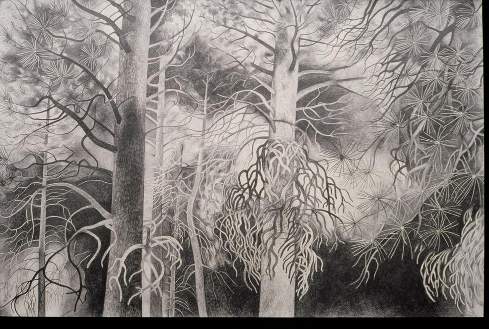 The Tree Project Ponderosa Pines