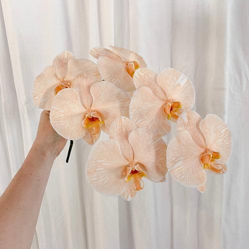 Pastel Single Stem Phalaenopsis Orchid