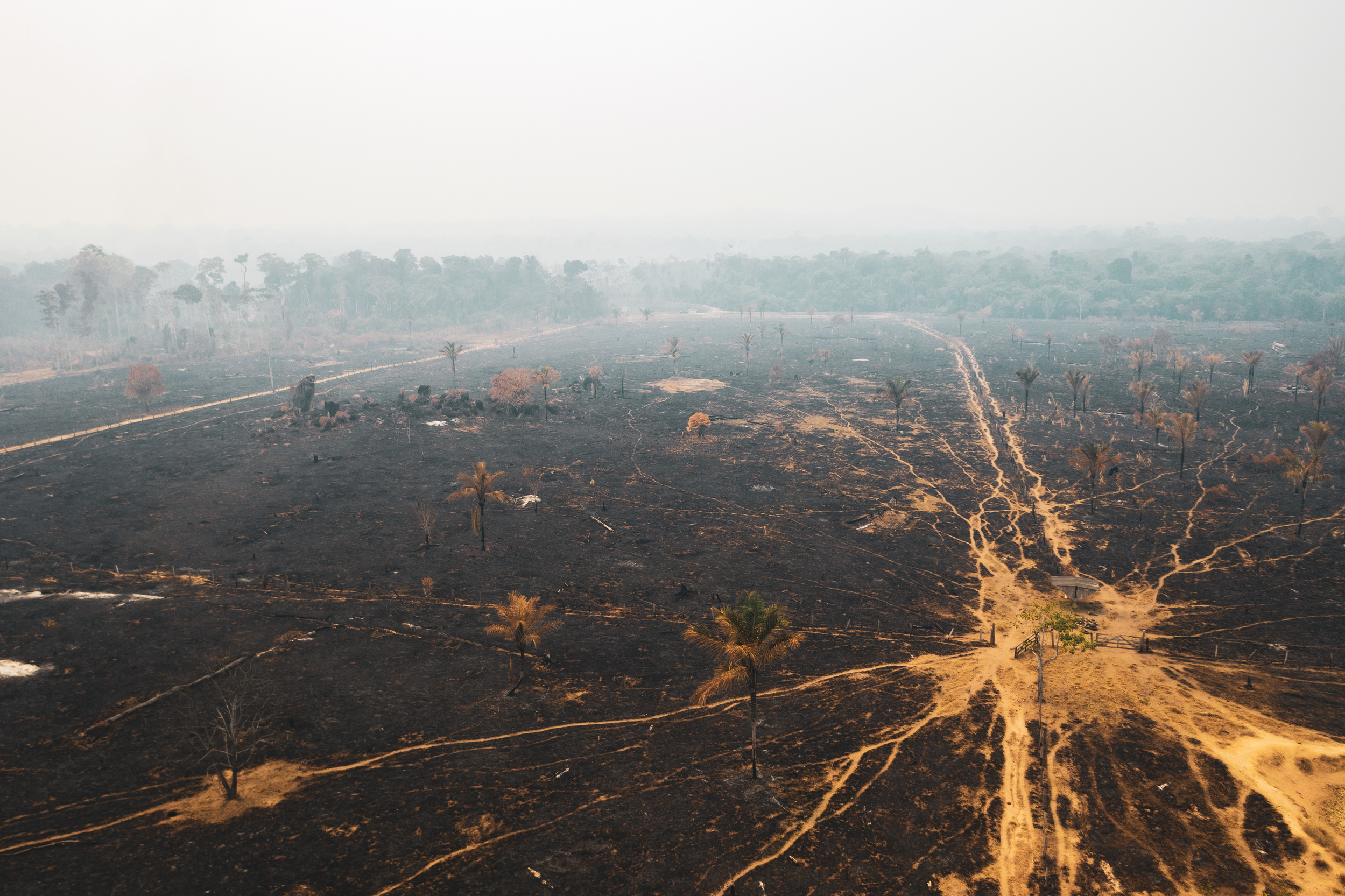 Amazônia em fogo