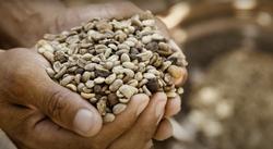 4 coisas por trás do café que seu supermercado vende