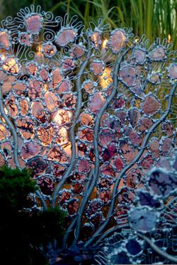gorgonia at nite.jpg