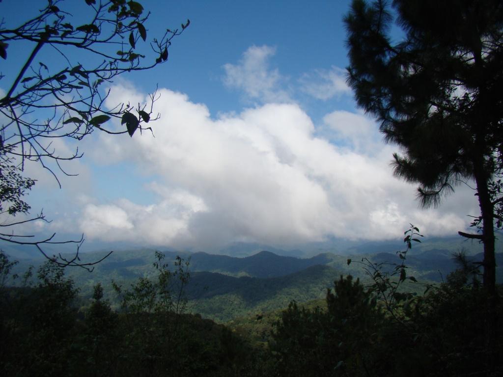 Природа Таиланда (4)