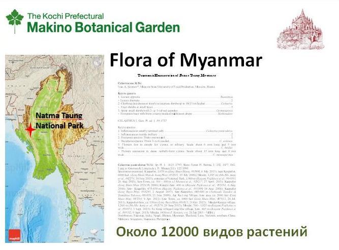 Бирма (7)