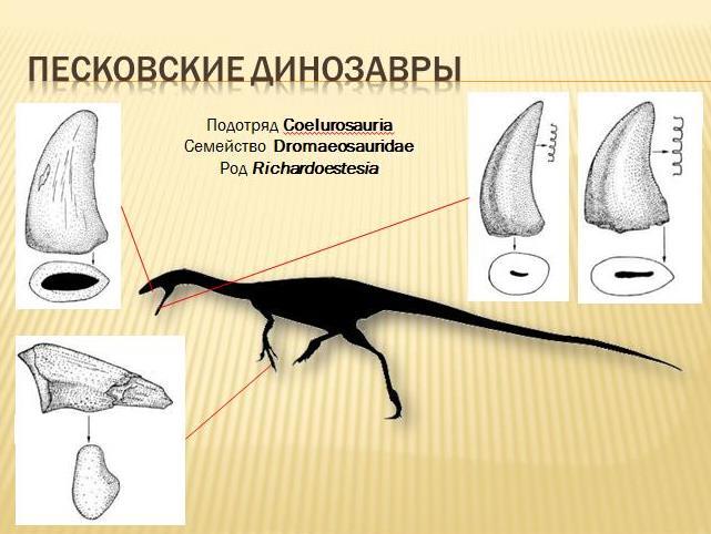 Палеонтология 1 (11)