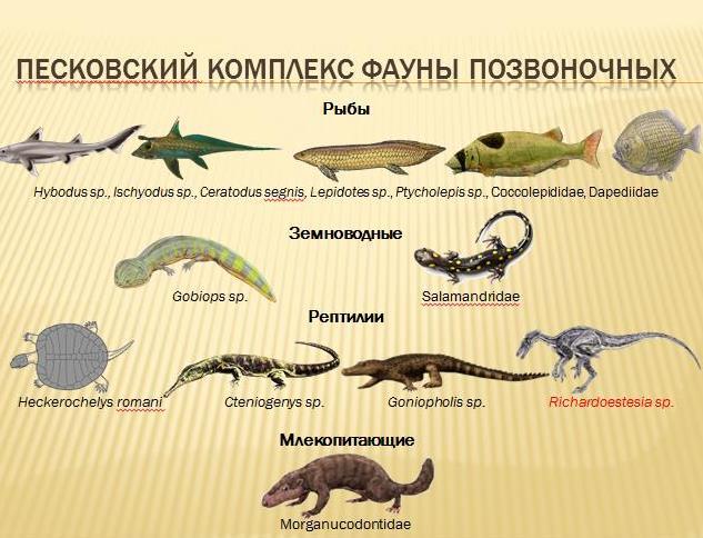 Палеонтология 1 (10)