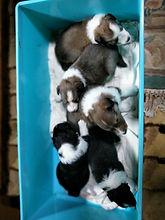 犬5匹01 - コピー.jpg