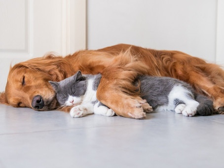 Bringing Home a Rescue Pet: How to Turn Your Home into a Pet-Friendly Space