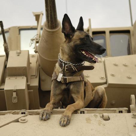 Honoring Military Dogs for K-9 Veterans Day