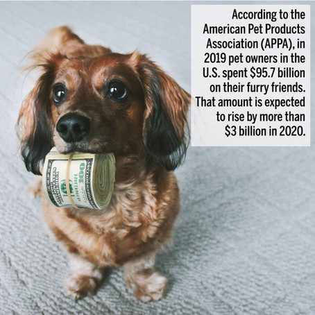 National Pet Day: 12 Facts About Pets & Pet Ownership