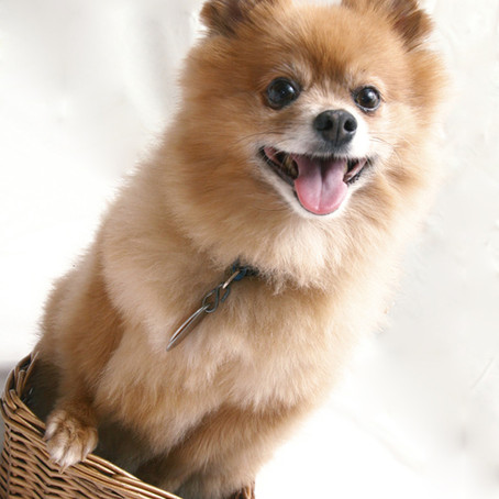 Top 10 Dog Breeds for a Paw-sitive Renting Experience