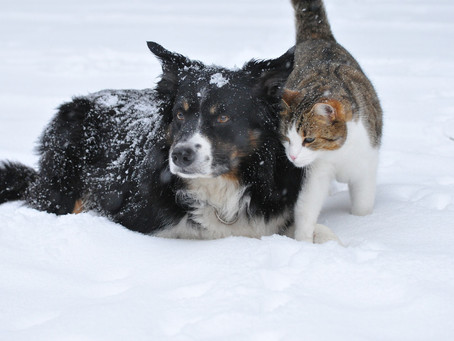 10 Cold Weather Safety Tips for Pets