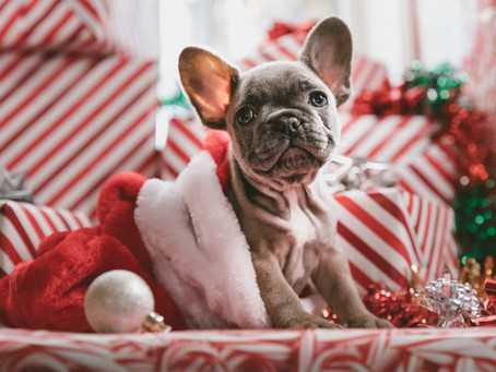 Keep Your Pets Safe During the Holiday's