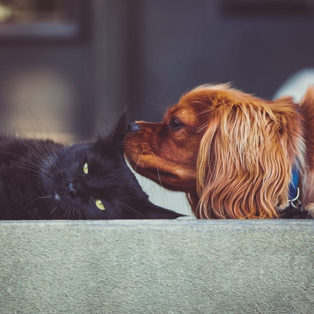 National Pet Parents Day: Tips to Keep Your Furry Friends Happy & Healthy During Quarantine