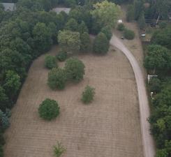 forestdrone1.jpg