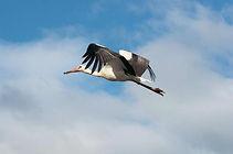 Brf Storken