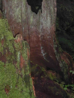tree stump photograph