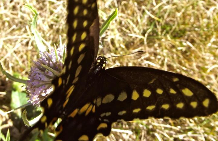 butterfly photograph