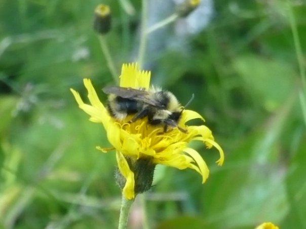 photograph bee