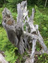 Art of Wood.