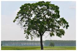 Memory of trees