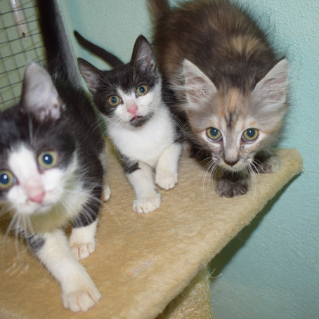 Katzenbabys in der Vermittlung (alle vermittelt, Blogeintrag vom Juli)