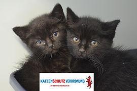 Katze 384 - Kopie - Kopie.JPG