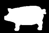 Porc bretagne blanc